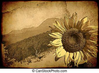 affisch, -, retro, solros, bakgrund