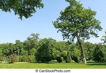 afforestation landscape in a park