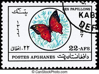 afganistán, -, hacia, 1987, mariposa