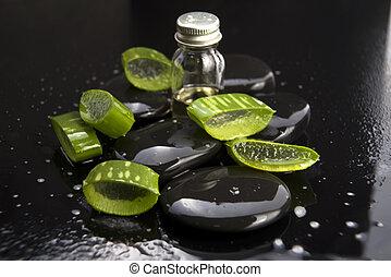 afgesnijdenene, steen, olie, bladeren, aloë