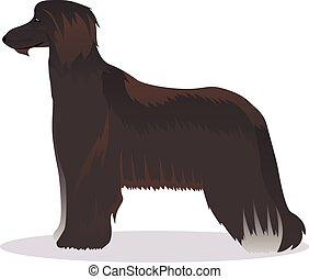 Afghan hound black