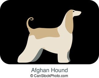 Afghan Hound dog breed flat icon design