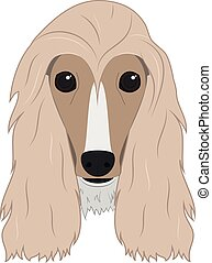Afghan Hound dog isolated on white background vector illustration