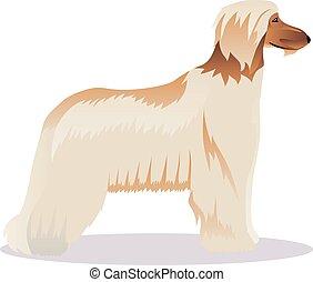 Afghan hound pale
