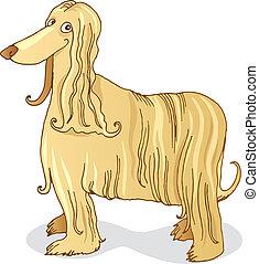 afghane, hund