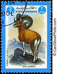 AFGHANISTAN - CIRCA 1984 Argali - AFGHANISTAN - CIRCA 1984:...