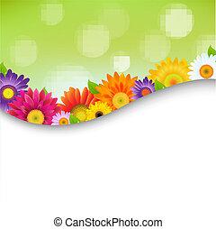afisz, kwiaty, barwny, gerbers