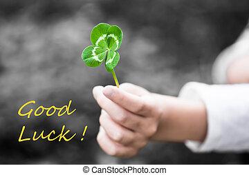 afortunado, trébol, -, buena suerte
