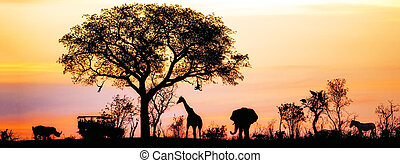 afričan, safari, silueta, prapor
