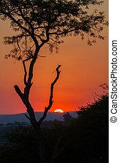 afričan, safari, západ slunce