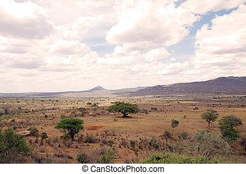 afričan, savana
