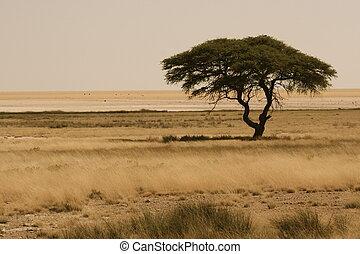 Africa - african tree in Etosha, Namibia