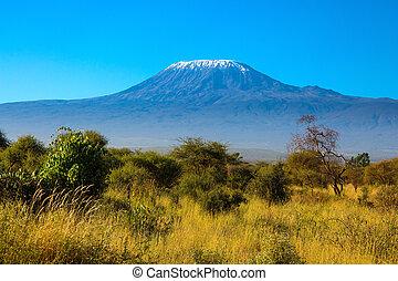 Africa. Amboseli Park - The famous snow peak of Kilimanjaro...