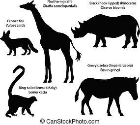 africa:, animais, lemur, silhuetas, rinoceronte, girafa, zebra, fennec