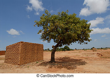 shea butter tree - Africa, Burkina Faso  shea butter tree