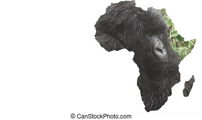 Africa continent shape with gorilla face, zooming in - White...