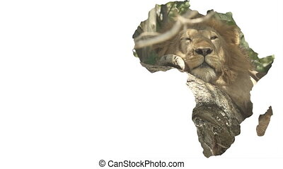 Africa continent shape with male lion sleeping on tree -...