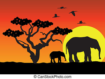 africa, elefanti