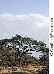 africa landscape 006