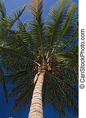 africa landscape 008 palm