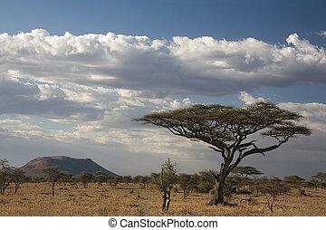 africa landscape 021 serengeti. tree