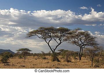 africa landscape 022 serengeti