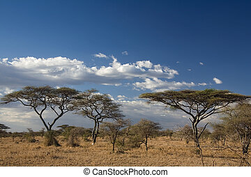 africa landscape 023 serengeti