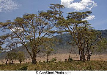 africa landscape 040 ngorongoro