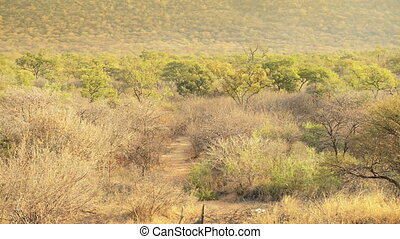 Zooming out on a classic African landscape at sunset with golden light in high definition