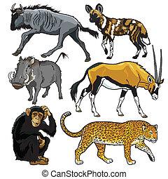 africa, set, animali
