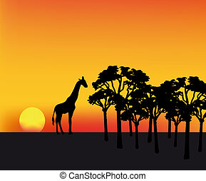 africa sunset - nice illustration of sunset in Africa with...