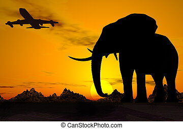 Africa travel in sunset.