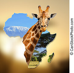 Africa Wildlife Map Design with geraffe and kilimanjaro