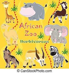 africaine, animals., herbivore, zoo.