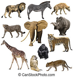 africaine, animaux, ensemble