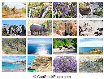 africaine, animaux sauvages, collage, faune, diversité, dans, kruger, parc, naturel, themed, collection, fond, beau, nature, de, afrique sud, vie sauvage, aventure, et, voyage