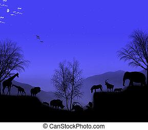 africaine, animaux, soir
