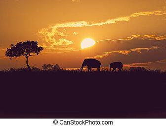 africaine, coucher soleil, éléphants