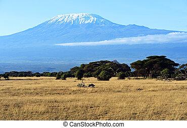 africaine, savane, dans, kenya