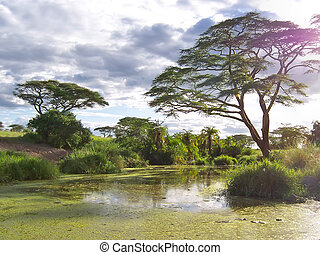 African acacia above a nice green lake - Serengeti park - Tanzania.