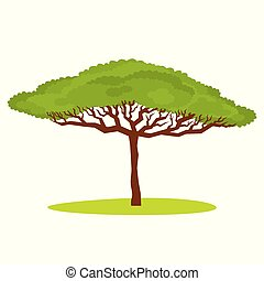 African Acacia tree Vector illustration isolated on white...