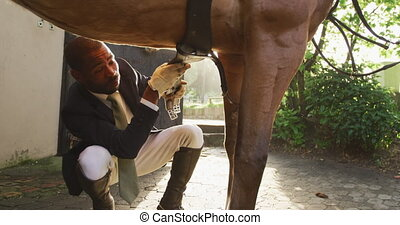 Front view close up of a smartly dressed African American man preparing the saddlery on a chestnut dressage horse, kneeling down and securing the girth before horse riding, backlit, slow motion