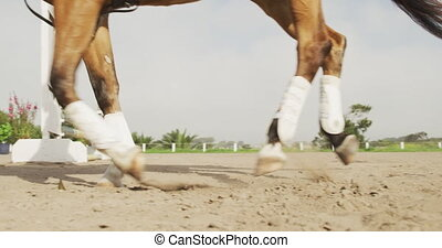 African American man riding his Dressage horse - Low angle ...