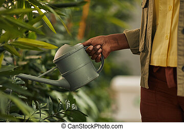 African-American Woman Watering Plants Close Up