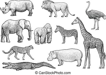 African animals illustration, drawing, engraving, ink, line...