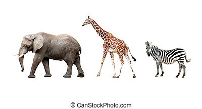 African animals isolated on white background