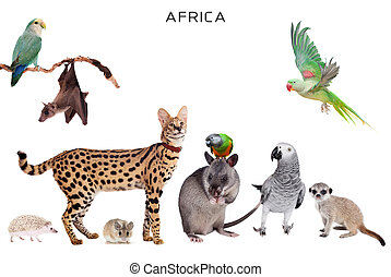 African animals on white - African animals set isolated on...