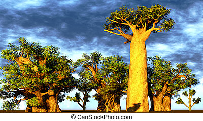 African baobabs