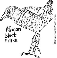 African black crake -  vector illustration sketch hand drawn with black lines, isolated on white background