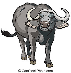 african buffalo - african cape buffalo, wild animal of ...